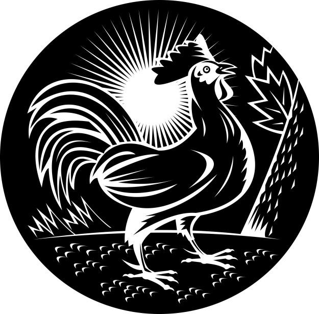 NX_rooster_sideup